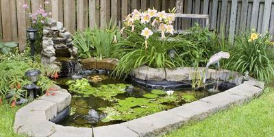 Самые интересные и полезные материалы об организации водоема