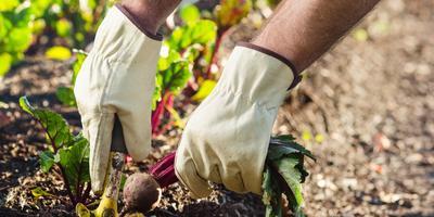 Сезонные работы в саду и огороде: третья неделя июня