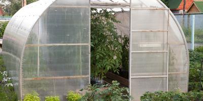 Как защитить растения в теплицах от перегрева
