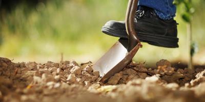 Как научиться огородничеству у природы
