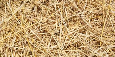 Как правильно замульчировать почву соломой?