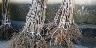 Общие рекомендации по выбору саженца и посадке плодовых деревьев