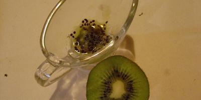 Зимние дачные забавы: а давайте попробуем вырастить киви из семян!