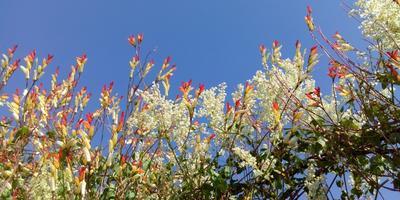 Что посадить на солнцепеке: жаростойкие растения