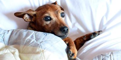 Этика собачьей жизни на даче