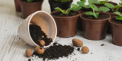 Перевалка — щадящий способ пересадки растений