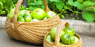 Необычные томаты: зеленые, оранжевые, желтые