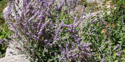 Высокие многолетники - импозантные доминанты дачных цветников