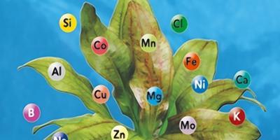 Удобрения: витамины для зелёных питомцев