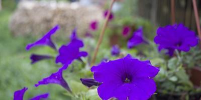 Экскурсия по моему саду и огороду - заходите в гости ;)