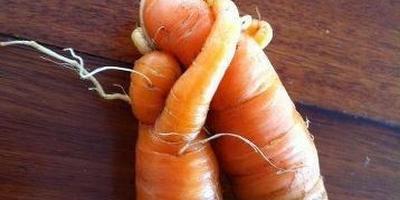 Овощная любовь