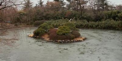 Остров, как украшение вашего водоема.