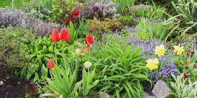 Куда исчезают луковицы тюльпанов?