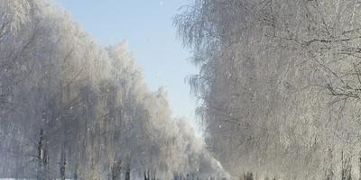 Первый день Нового года - поздравляем нашу дачу с праздником :))
