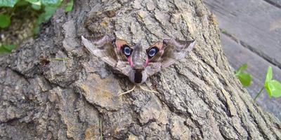 Что за хищник глядит на вас?