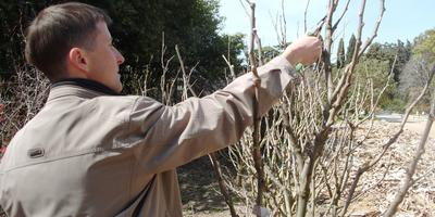 Обрезка декоративных древесных растений: сроки, виды, правила
