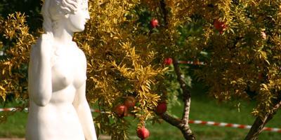 Обрезка декоративных кустарников: от Г до З