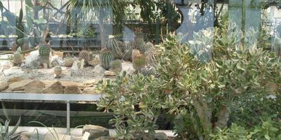 Прогулка в кактусовую оранжерею