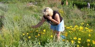 Июльская страда: убираем травы