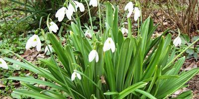 Трогательная красота для романтического сада