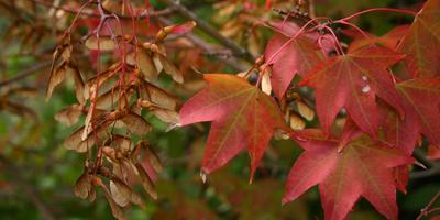 Сезонные работы в саду и огороде: вторая неделя октября