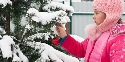 Сезонные работы в саду и огороде: третья неделя декабря