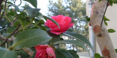 Цветение вопреки зиме