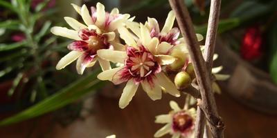 Догадайтесь, что за кустарник сейчас цветет в Саду?