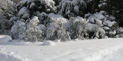 Сезонные работы в саду и огороде: первая неделя февраля