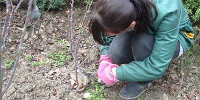 Сезонные работы в саду и огороде: третья неделя февраля