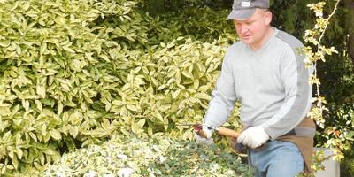 Сезонные работы в саду и огороде: конец марта - начало апреля