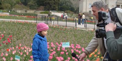 Фоторепортаж с выставки тюльпанов Никитского ботанического сада (Крым)