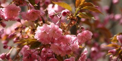 Сезонные работы в саду и огороде: четвертая неделя апреля