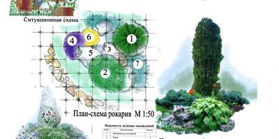 Как самому составить проект каменистого сада?