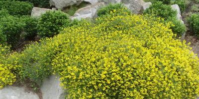Основные нюансы ухода за растениями в рокарии