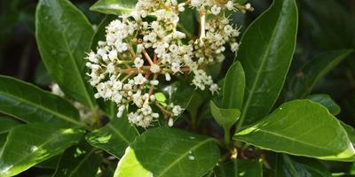 15 калин и особенности их выращивания