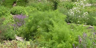 Травы, предпочитающие щелочные почвы