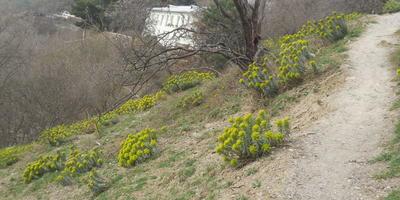 Чем пахнет весна?