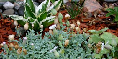 10 идеальных растений для полутенистого рокария