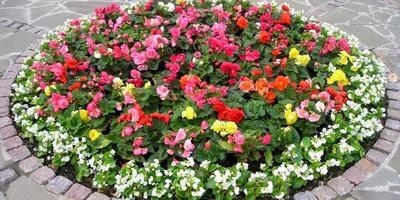 Клумбы и цветники - в чем разница