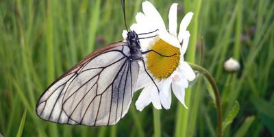 Бабочки. Просто бабочки)))