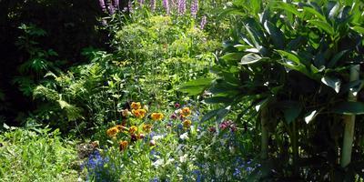 Сад в середине лета