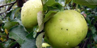 Сезонные работы в саду и огороде: четвертая неделя сентября