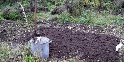 Сезонные работы в саду и огороде: конец сентября - начало октября