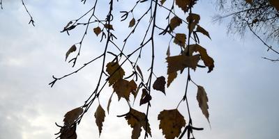 Листаем народный календарь: третья неделя октября