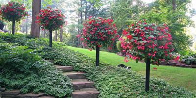 Контейнерный сад своими руками - это просто!