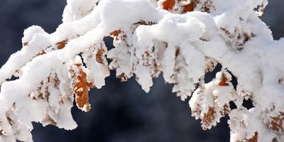 Листаем народный календарь: третья неделя декабря