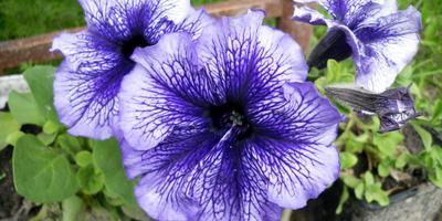8 цветочных культур, которые сеют на рассаду в феврале