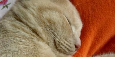 Немного позитива: кот, который улыбается :)