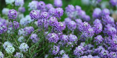 16 цветочных культур, которые нужно посеять на рассаду в марте